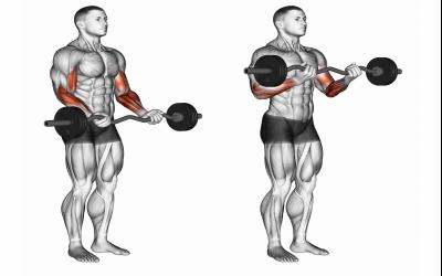 Standing Bicep Bar Curls