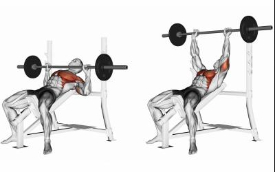 Traditional Bench Press
